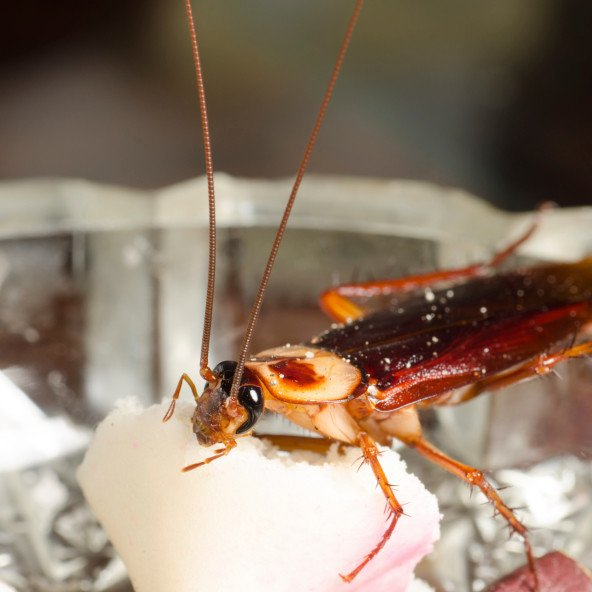 3 Facts You Did Not Know About Cockroaches