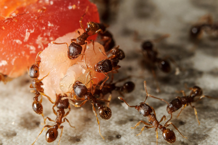 Are Ants Invading Your Home Learn What To Do Now Slug A
