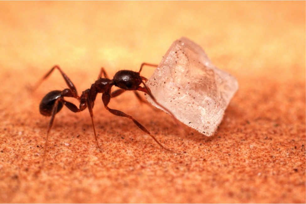 Image Result For How Do You Get Rid Of Ants In The Kitchen