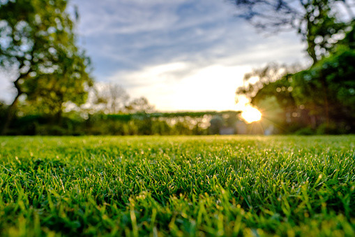 Five Winter Lawn Care Service Tips From
